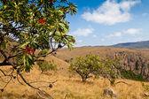 Träd i berg — Stockfoto
