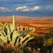 Cactus in a Valley lit by the evening sun — Stock Photo