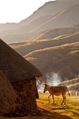 Donkey lit by evening sun — Stock Photo