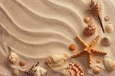 Sea shells with sand — Stock Photo