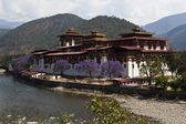 Punakha Dzong in Spring with purple Jacaranda trees (Bhutan) — Stock Photo