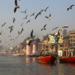 图库照片: SEAGULLS IN THE MORNING AT THE HOLY GANGES RIVER IN VARANASI. INDIA