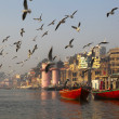 Foto de Stock  : SEAGULLS IN THE MORNING AT THE HOLY GANGES RIVER IN VARANASI. INDIA