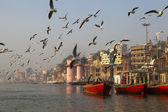 SEAGULLS IN THE MORNING AT THE HOLY GANGES RIVER IN VARANASI. INDIA — Stock Photo