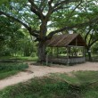 Foto Stock: Phnom Penh - Killing Fields of Choeung E