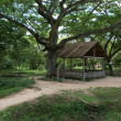Stockfoto: Phnom Penh - Killing Fields of Choeung E