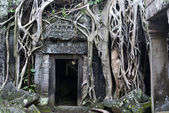 Angkor - baumwurzeln decken einen eingang von der ta prohm kloster — Stockfoto