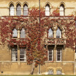 Ivy on Christ Church College — Stock Photo