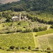 Vineyards and Estate In Umbria — Stock Photo