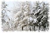 Första snön för säsongen — Stockfoto
