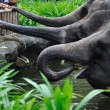 Foto Stock: AsiElephants