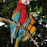 Beautiful parrot. — Stock Photo