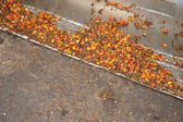Hurma yağı meyve — Stok fotoğraf