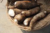 Fresh Cassava — Stock Photo