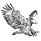 Eagles – Sketching — Stock Photo
