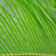 Green leaf of palm tree — 图库照片 #9171651