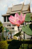 Beautiful pink lotus flower — Stock Photo