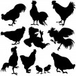Chicken Silhouetts — Stock Vector #9540123