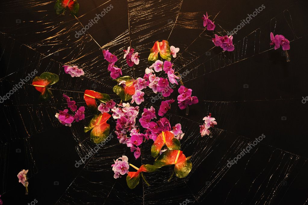 Beautiful wild flowers on the spider web, selective focus  — Stock Photo #9761985