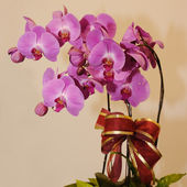 Beautiful orchid — 图库照片