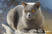 Cat outdoor — Stock Photo