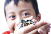 Child and turtle — Stock Photo