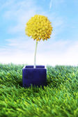 Yellow flower on the pot — Stockfoto