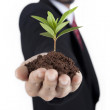 Growing green business — Stock Photo