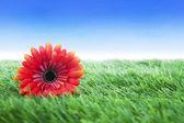 цветы на траве выстрелил над голубое небо — Стоковое фото