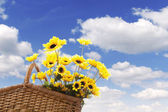 Picnic basket with sunflower — Stok fotoğraf