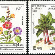 Постер, плакат: A stamp printed in Afghanistan shows flower