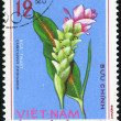 Curcuma Zedoaria. Vietnam postage stamp — Stock Photo