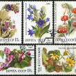 Medicinal Plants, postage stamp — Stock Photo