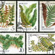 Ferns, postage stamp — Stock Photo #10042818