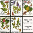 Medicinal plant from Siberia, postage stamp — Stock Photo
