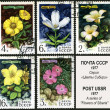 Sibirian flower, postage stamp — Stock Photo