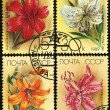 Flower lilium, postage stamp — Stock Photo #10043157