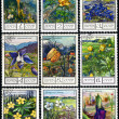 Flowers of the mountains of Caucasus, postage stamp — Stock Photo