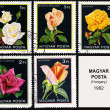 Rose, series flowers, postage stamp — Stock Photo