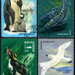 Antarctic Fauna, postage stamp — Stock Photo