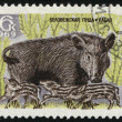 Wild boar, series Animals from Bialowieza Forest Reserve — Stock Photo