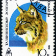 Eurasian Lynx. Postage stamp USSR — Stock Photo
