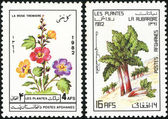 A stamp printed in Afghanistan shows flower — Stock Photo
