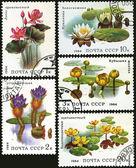 Aquatic plant, postage stamp — Stock Photo