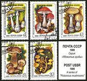 почтовая марка ссср, ядовитые грибы — Стоковое фото