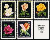 玫瑰、 系列鲜花邮票 — 图库照片