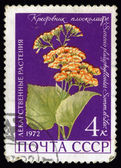 Medicinal Plants. Postage stamp USSR — Stock Photo