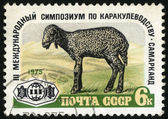 Karakul. Postage stamp — Stock Photo