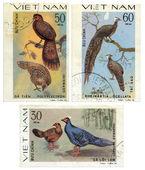 Gevarieerde verzameling van vogels. vietnam postzegel — Stockfoto