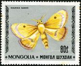 Butterfly Clouded Buff - Diacrisia sannio — Stock Photo